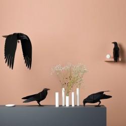 Ibride Raven